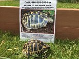 Tortoise reunited with his owner nearly a year after he disappeared